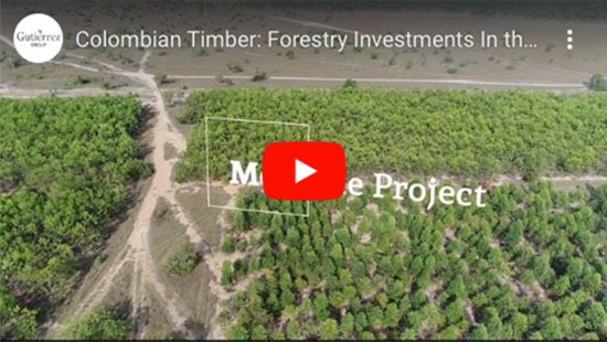 Colombian Timber Youtube